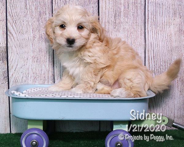 Sidney (M)