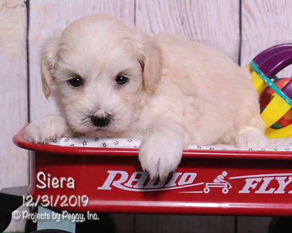 Siera (F) – Reserved