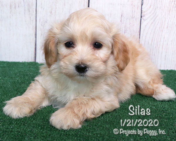 Silas (M) – Reserved