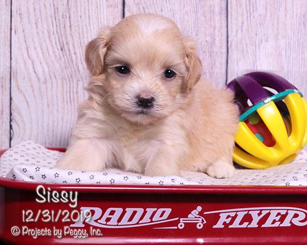 Sissy (F)