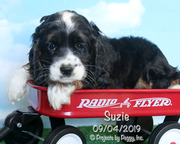 Puppies for Sale » Martin's Double E Kennel, LLC