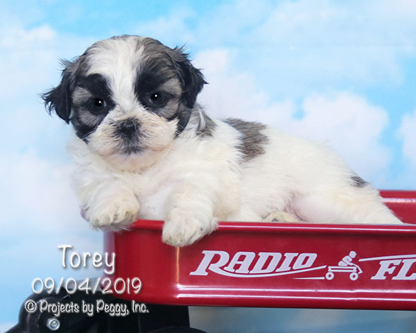 Torey (F) Reserved