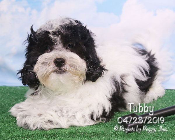 Tubby (M) – Reserved