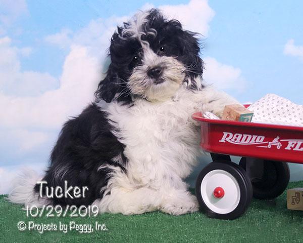 Tucker (M)
