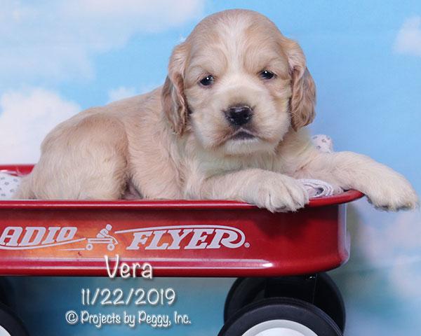 Vera (F)