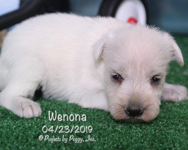 Wenona (F)
