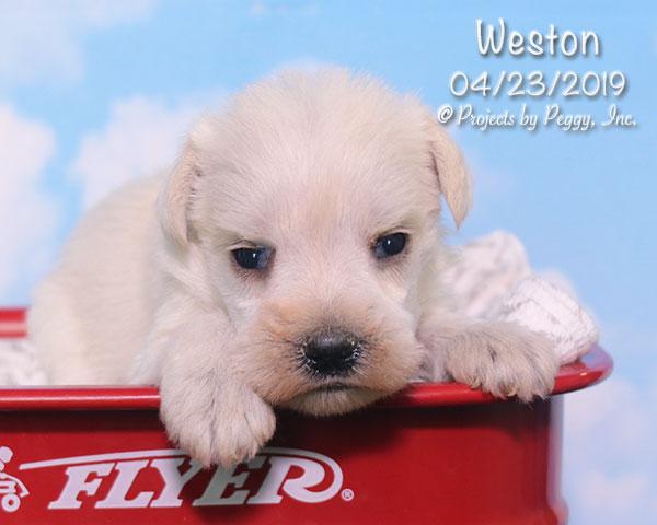 Weston (M)