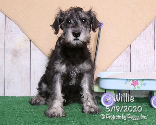 Willie (M) – Sold