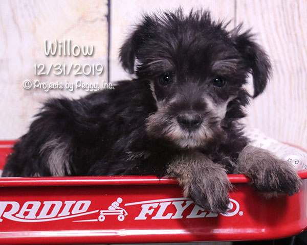 Willow (F) – Reserved